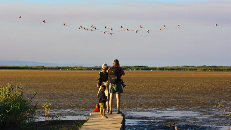 Llacuna del Garxal. Observación aves Parque Nacional Delta Ebre